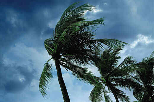 Palm trees being blown in high winds